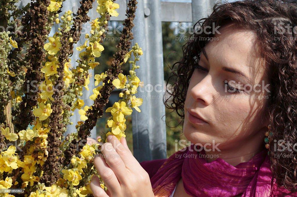 Dense flowering mullein canadian outdoor girl stock photo
