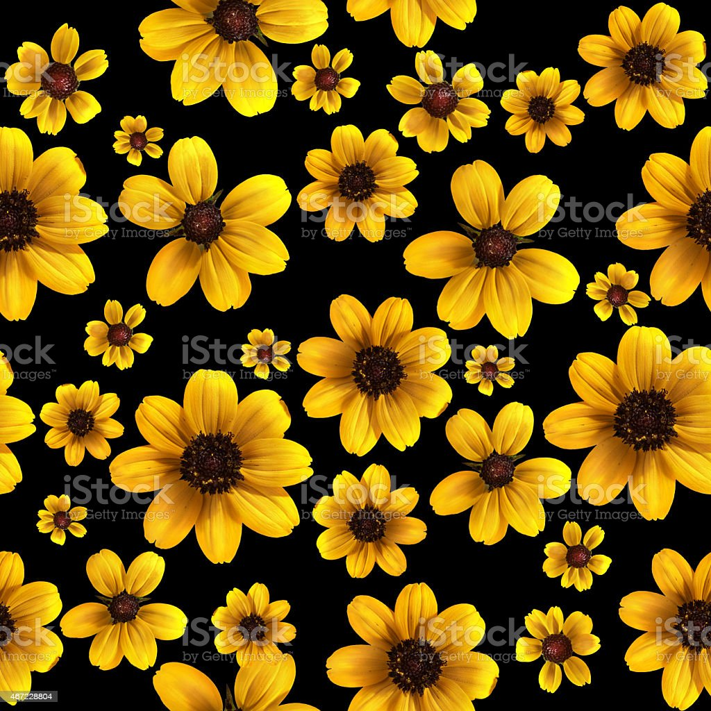 Yellow flowers on black background seamless background pattern high yellow flowers on black background seamless background pattern high resolution royalty free stock photo mightylinksfo