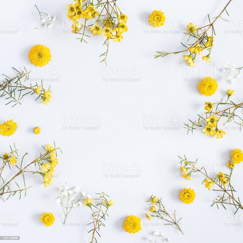 Yellow flowers on gray background flat lay top view square stock yellow flowers on gray background flat lay top view square royalty free mightylinksfo
