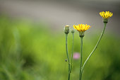 yellow flowers on green background blurred