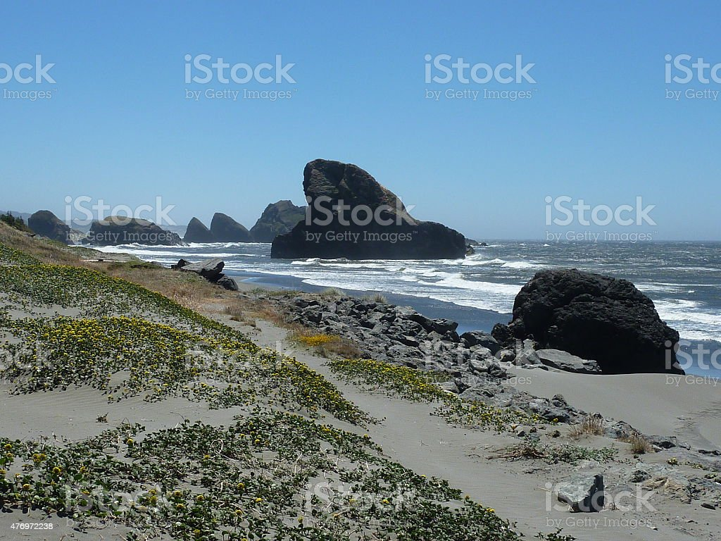 Yellow flowers on rocky beach stock photo