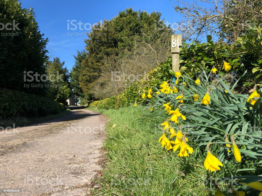 Yellow Flowers On The Road To The House Stock Photo More Pictures