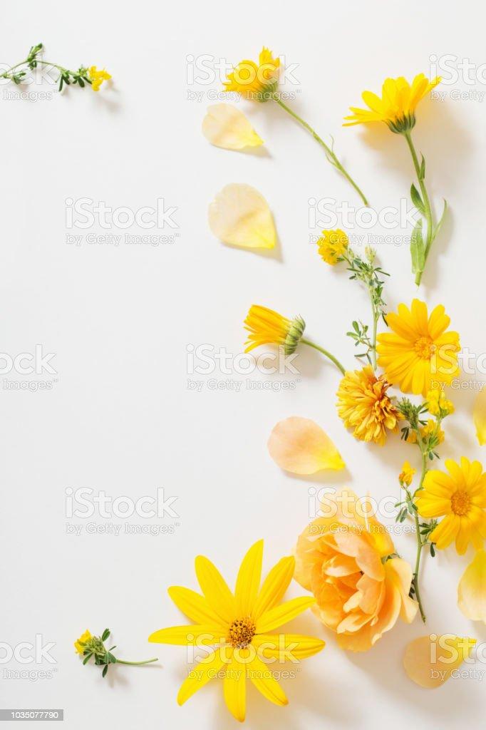 Yellow flowers on white background stock photo more pictures of yellow flowers on white background royalty free stock photo mightylinksfo