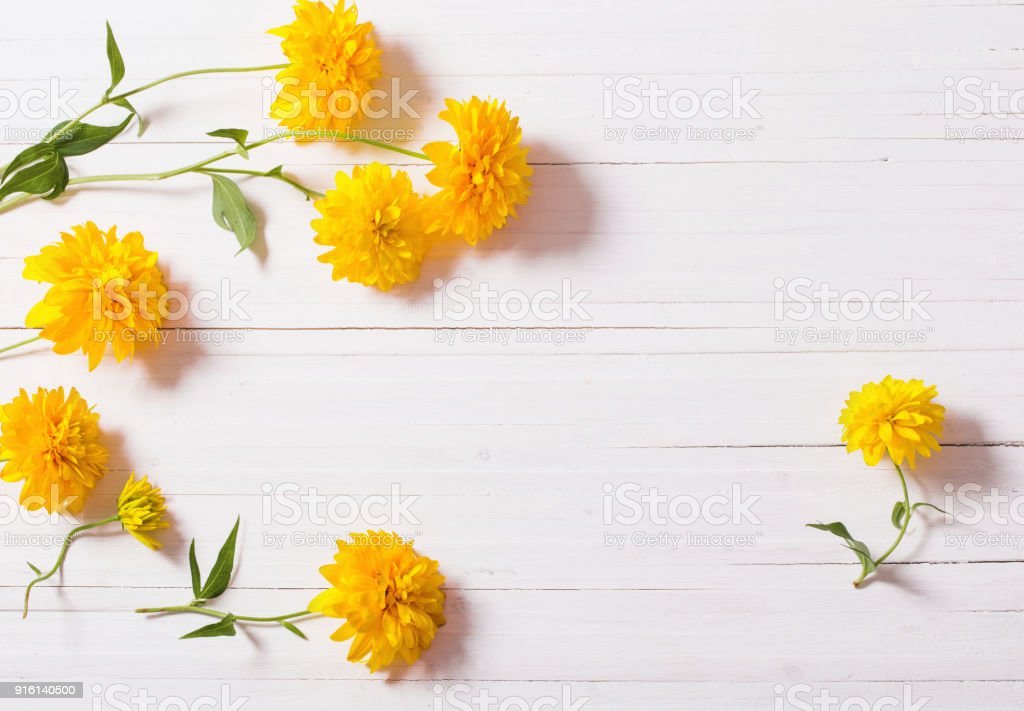 Yellow Flowers On White Background Stock Photo More Pictures Of