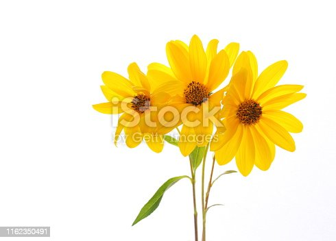 Yellow flowers isolated on white.