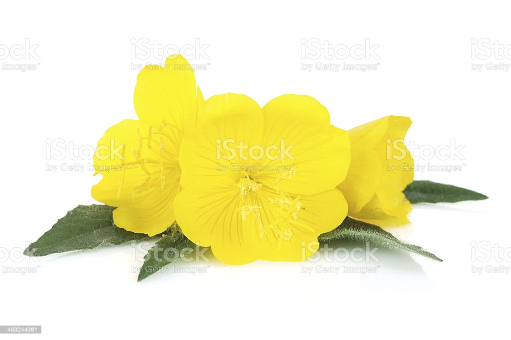 Yellow flowers royalty-free stock photo