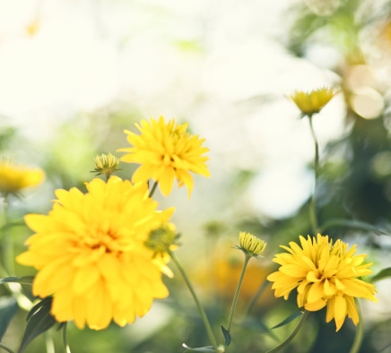 Yellow flowers.Summer time.