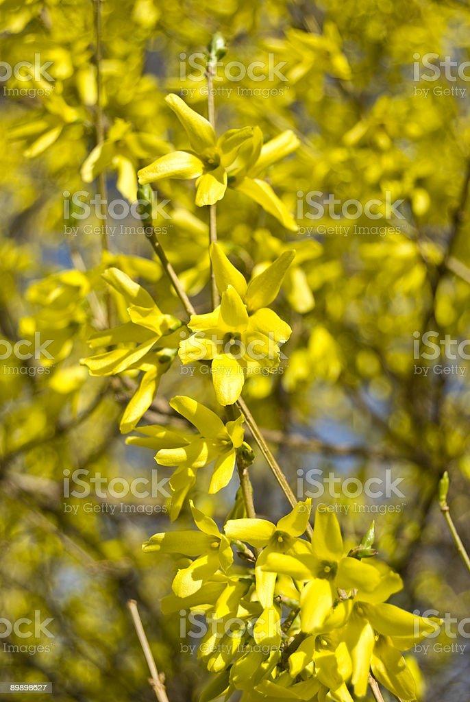 Желтые цветы Стоковые фото Стоковая фотография