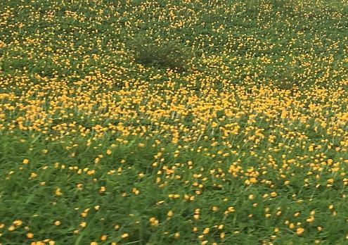 Gele Bloemen Stockfoto en meer beelden van Bloem - Plant