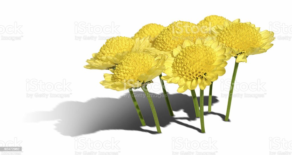 Yellow flowers standing like trees royalty-free stock photo