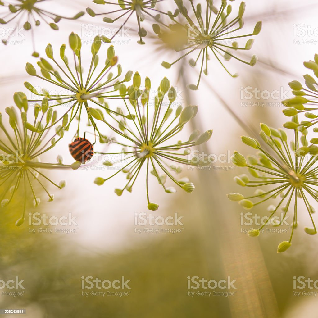 yellow flowers with a bug royalty-free stock photo
