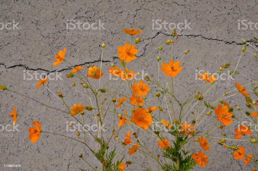 Yellow flowers with grey wall background stock photo