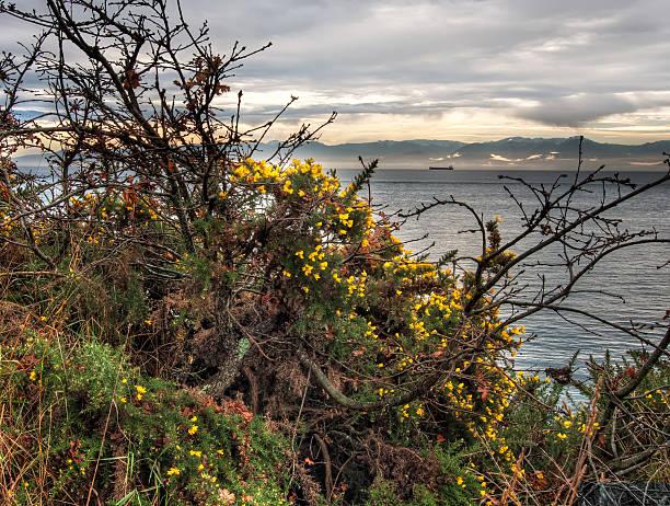 Yellow Flows Alongside Ocean stock photo