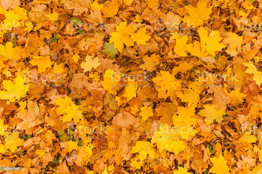 yellow foliage stock photo