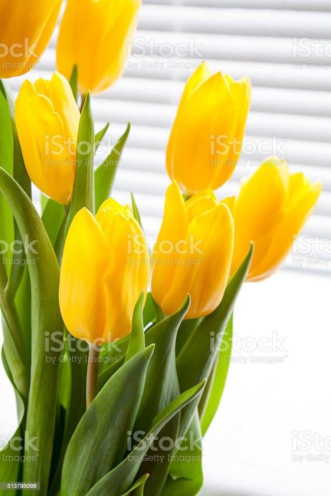 Yellow fresh tulips on light background royalty-free stock photo