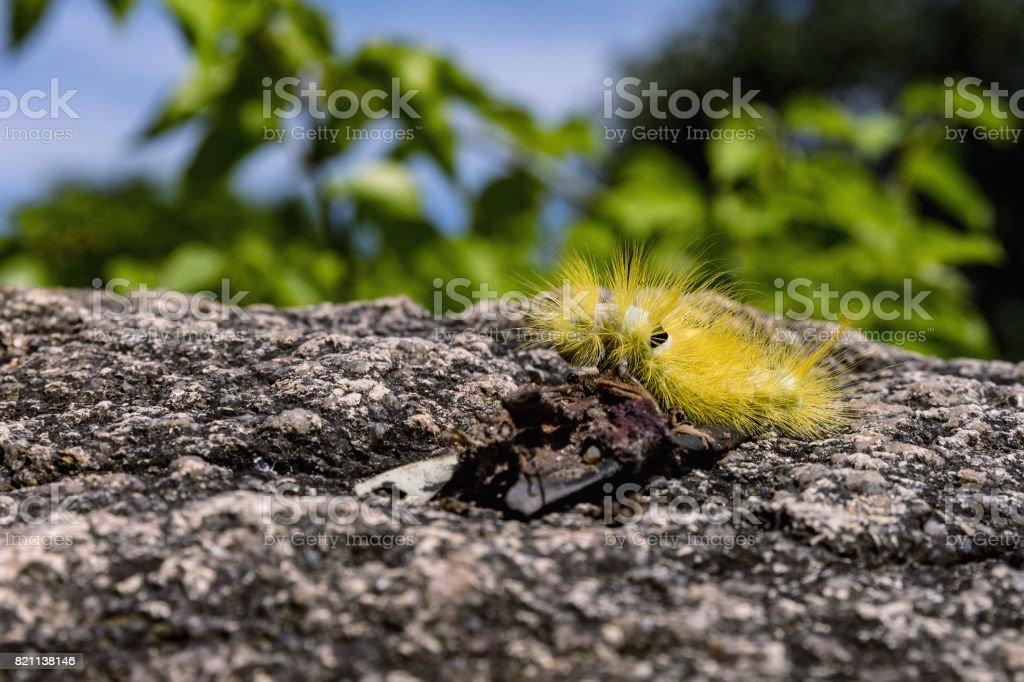 Yellow furry caterpillar on stone stock photo