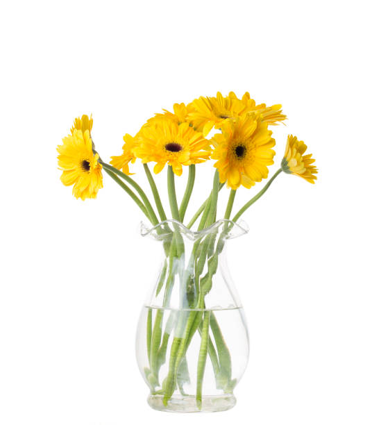 yellow gerber daisies in vase - vase stock pictures, royalty-free photos & images