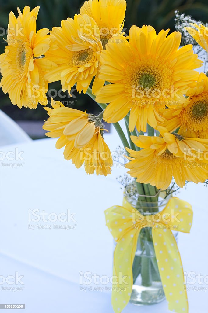 Yellow Gerber Daisies stock photo