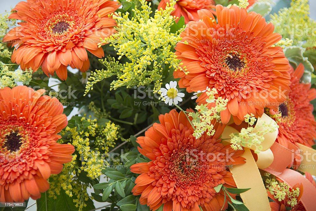 yellow gerbera daisy royalty-free stock photo