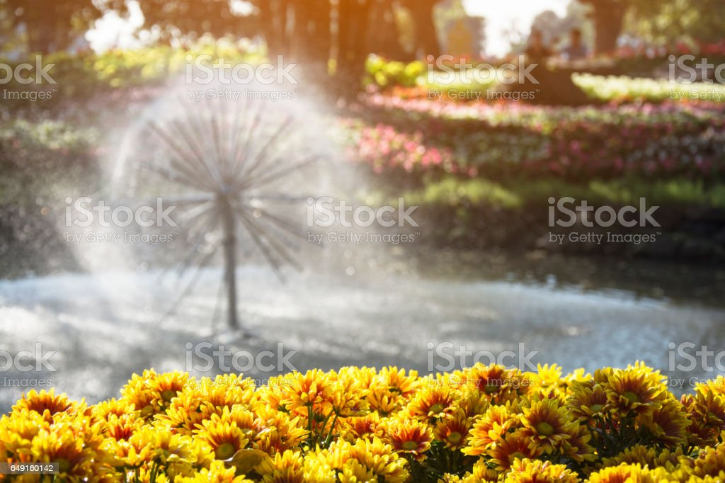 Yellow Gerbera flower garden with Blurred floating fountain in the park stock photo