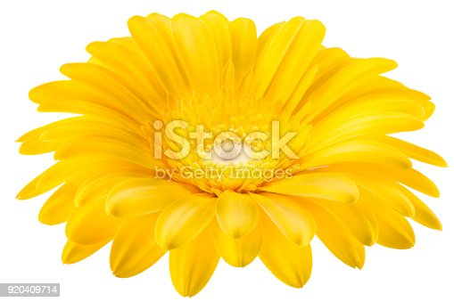 istock Yellow gerbera flower isolated on white background 920409714