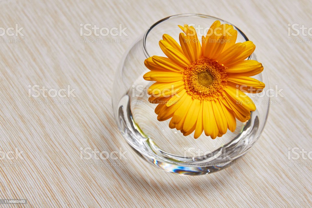 Yellow gerbera in a glass vase with water. The spring time of the...