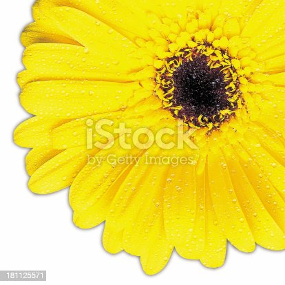 Yellow gerbra large with clipping path and very detailed pettles.<big file but kinda pixelly -ed>