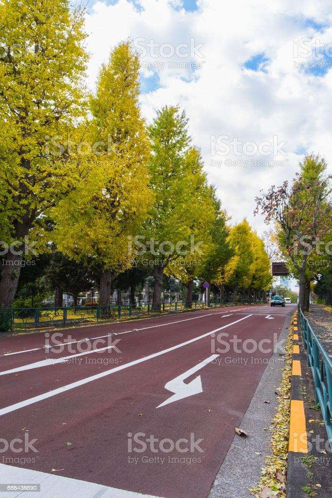 東京の青山墓地付近黄色いイチョウの木 ストックフォト