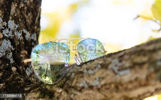 Yellow ginkgo tree reflected on sunglasses.