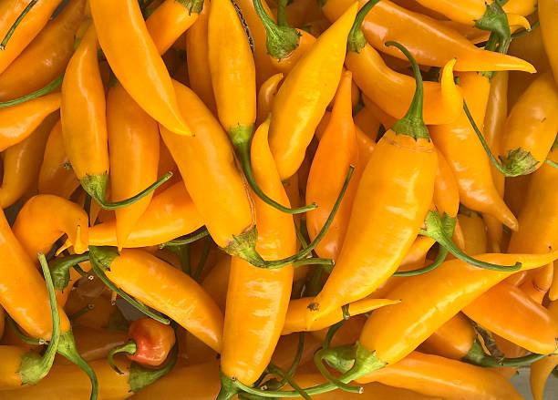 Yellow Girl Finger Pepper stock photo