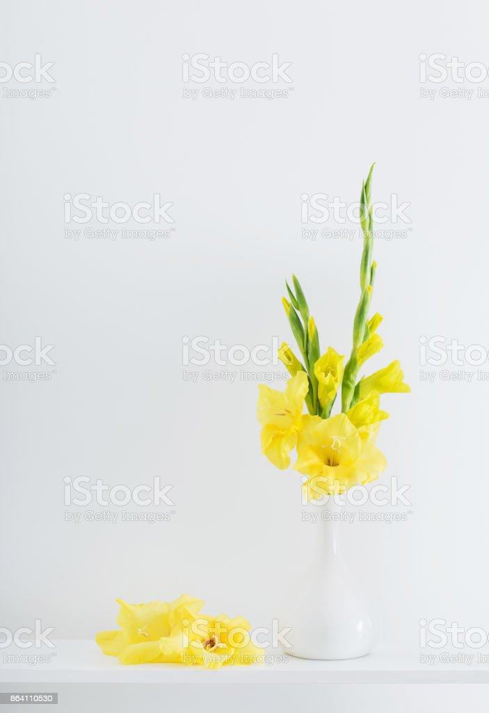 yellow gladiolus on white background royalty-free stock photo