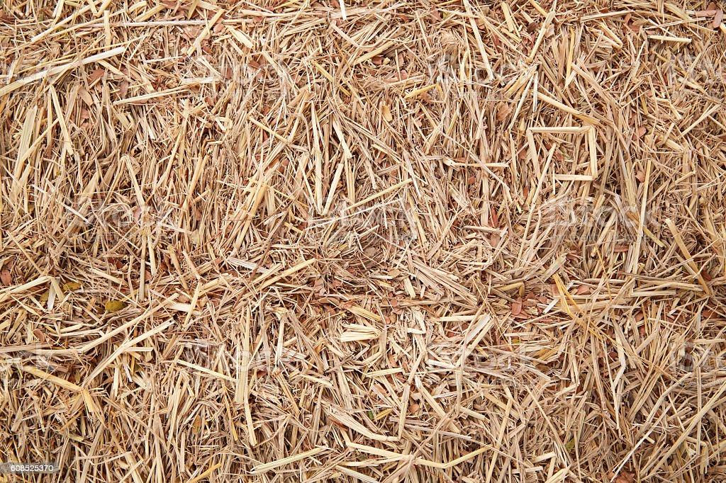 yellow grass backgroud stock photo
