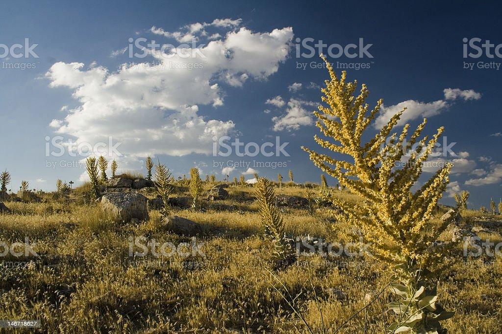 Yellow Grass Under Sky stock photo