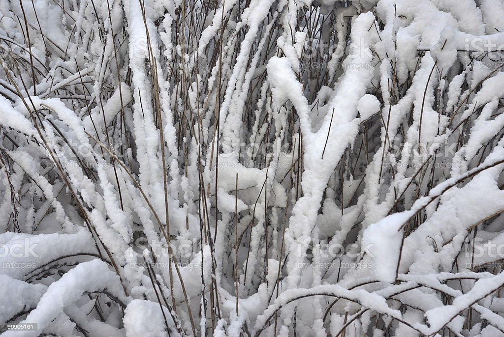Yellow grass under the dropped out snow royalty-free stock photo