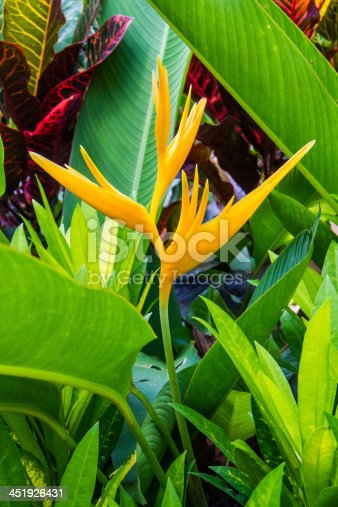 Yellow heliconias with leaves tree background.