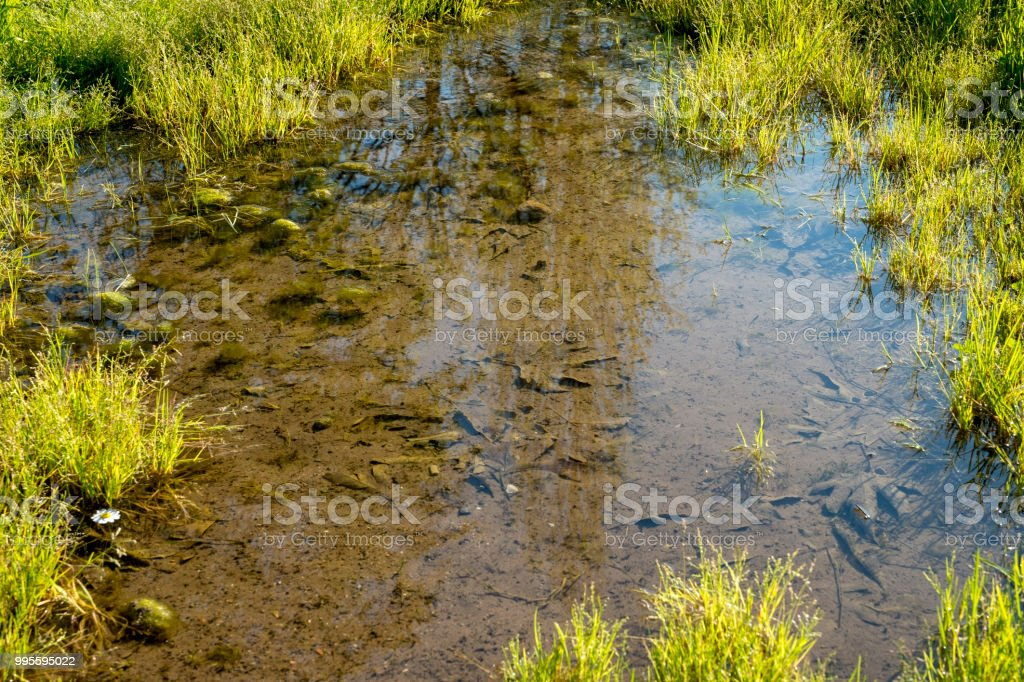 yellow herbs reflected in the water stock photo