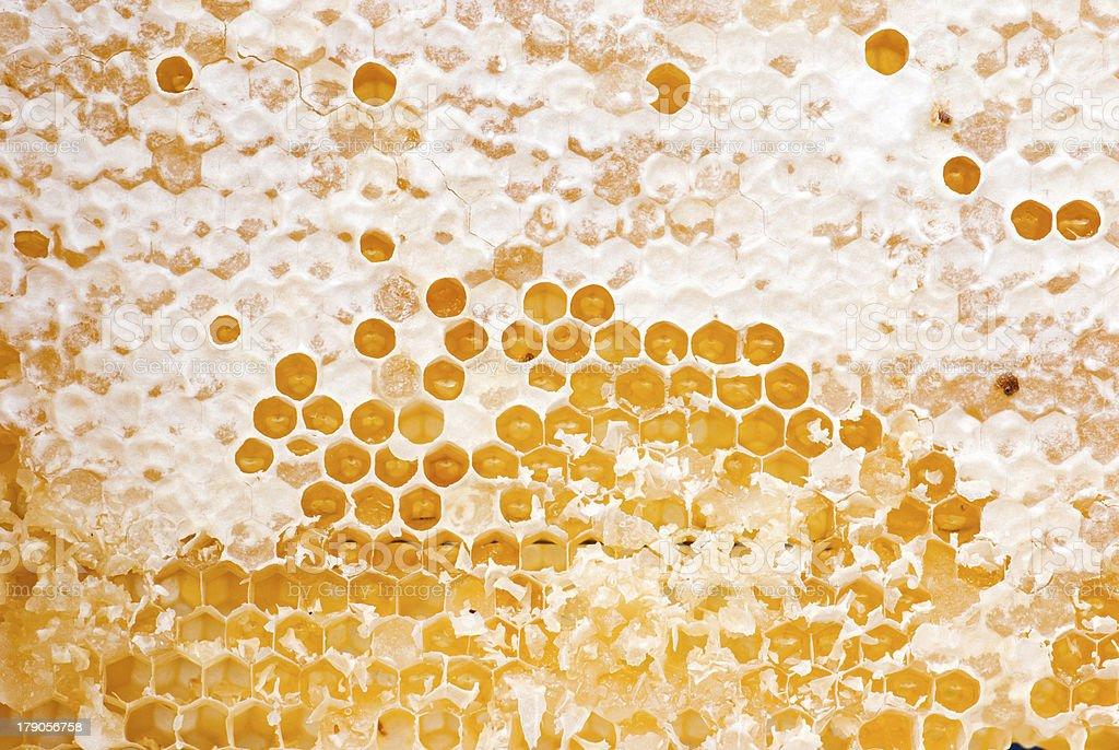 Yellow honeycomb full of honey stock photo