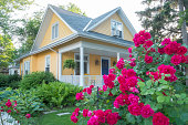 Pink Rose Bush in Front of a Beautiful Yellow House.