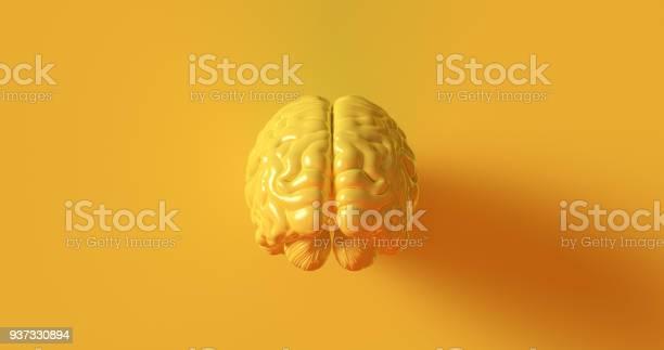 Yellow human brain anatomical model picture id937330894?b=1&k=6&m=937330894&s=612x612&h=wq4efu9ofmbtfrsscqjenrzlzc8dm2wr7yndkca2ads=