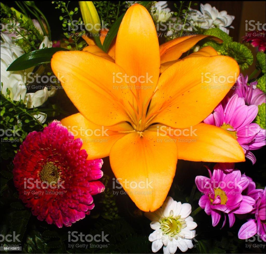 Yellow Iris (flower) foto stock royalty-free