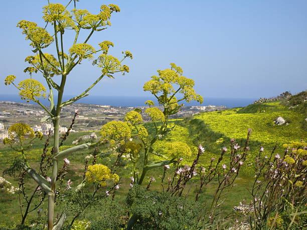 Gelbe island – Foto