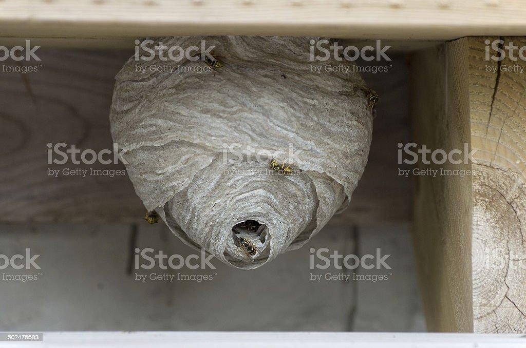 Veste jaune nid d'abeille