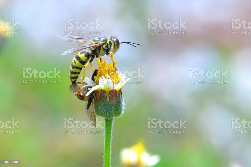 avispa chaqueta amarilla situada en la bella flor - foto de stock