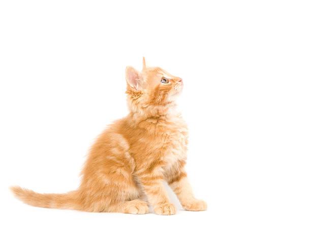 Yellow kitten picture id147668044?b=1&k=6&m=147668044&s=612x612&w=0&h=n9vqi1zi0ls48kohdr5ajjicdntqtd4 jd tx bmneg=