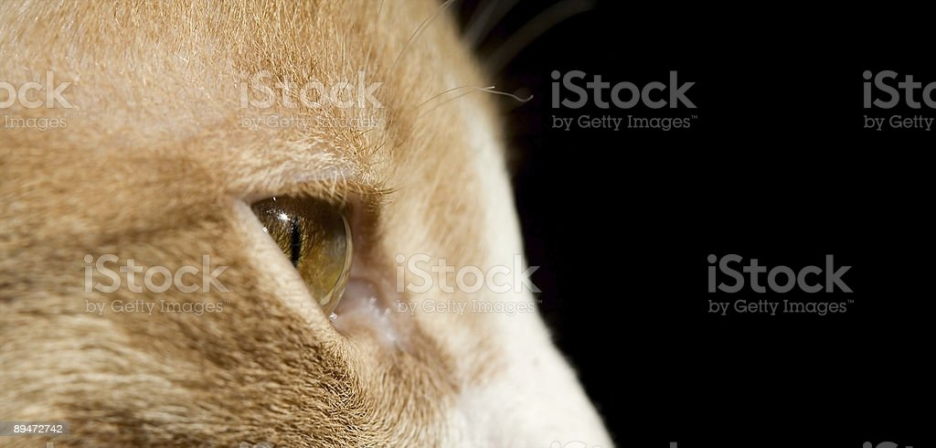 yellow kitten royalty-free stock photo