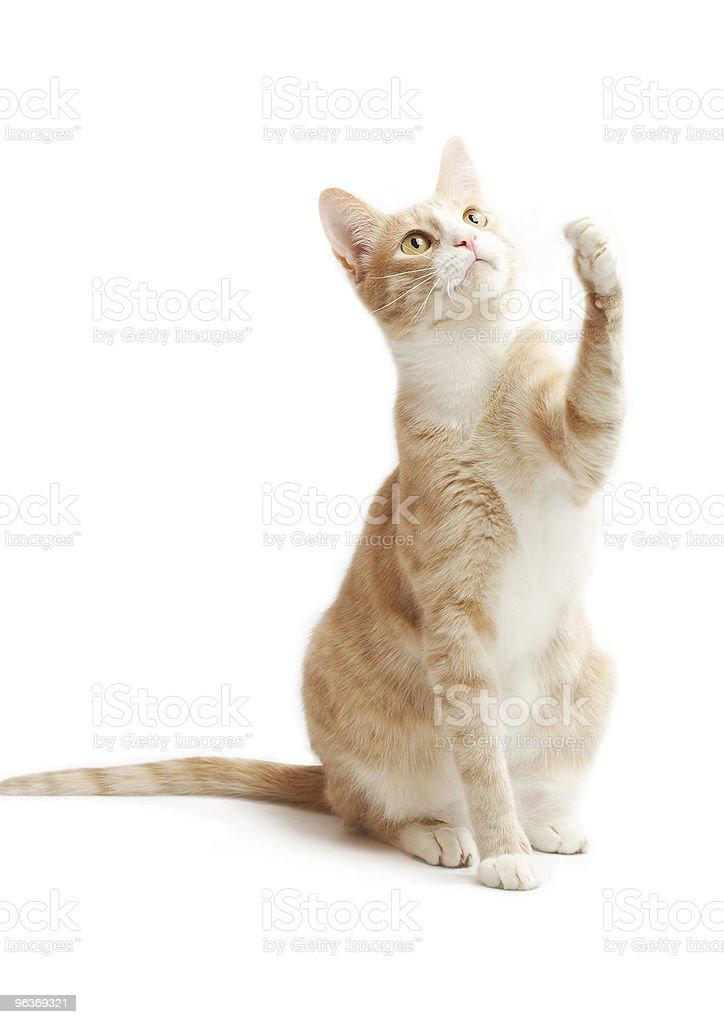 yellow kitten royalty-free stock photo