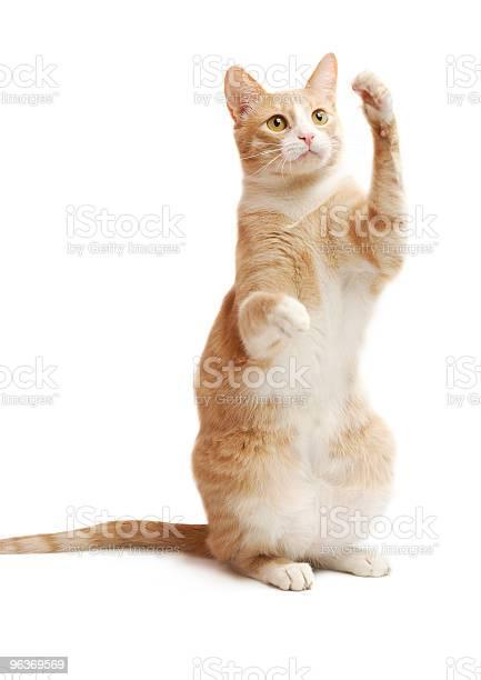 Yellow kitten picture id96369569?b=1&k=6&m=96369569&s=612x612&h=g71c6rh3ufxrja15igmbgxsa nainvoy1ad9c xmh6o=