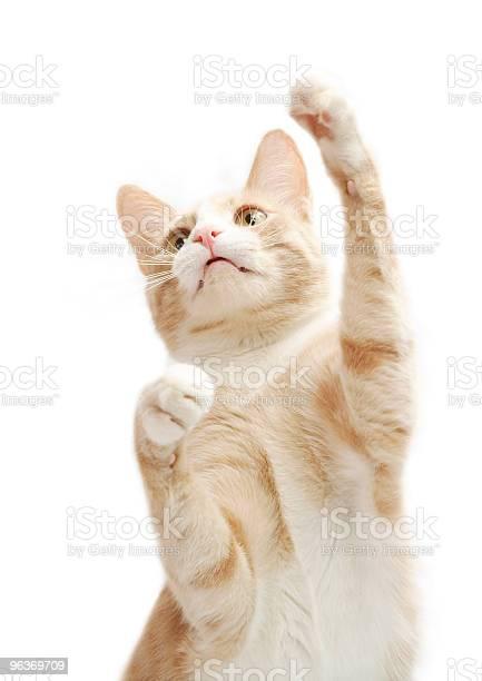 Yellow kitten picture id96369709?b=1&k=6&m=96369709&s=612x612&h=71lql7bcvwiw4hcmy7tvzgb3nb m7pzoocc8epuoyiq=