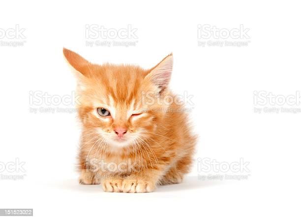 Yellow kitten winking on white picture id151523022?b=1&k=6&m=151523022&s=612x612&h=0nxi5yj5mtkoa5rgrbfpwscnyw0c ga5u q8kggqjak=