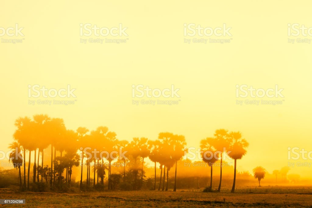 Yellow landscape of the setting sun. Gold fill stock photo